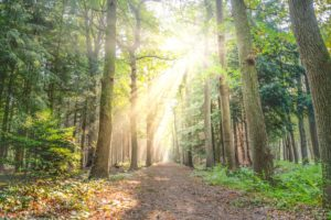 A bright forested path